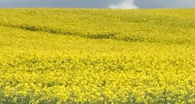 Lieblingsfarbe gelb von besonderk Interieur Design